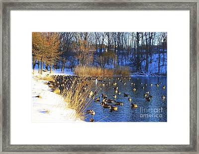 Winter By The Lake Framed Print