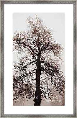 Winter Tree In Fog Framed Print