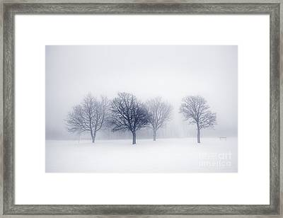 Winter Trees In Fog Framed Print by Elena Elisseeva