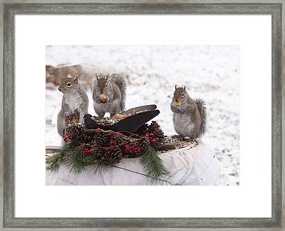 3 Wise Squirrels Framed Print
