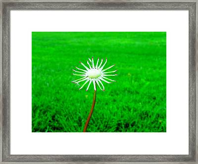 3 Wishes Left Framed Print by Andrea Dale