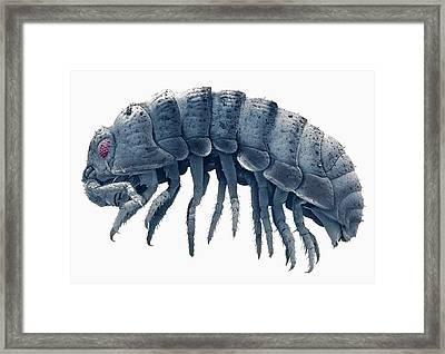 Woodlouse Framed Print