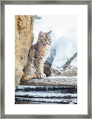 Wyoming, Yellowstone National Park Framed Print by Elizabeth Boehm