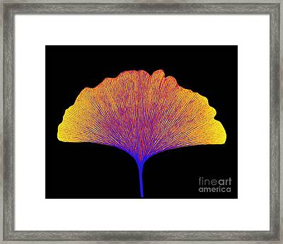 X-ray Of Ginkgo Leaf Framed Print