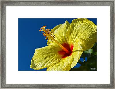 Framed Print featuring the photograph yellow Hula Girl Hibiscus by Aloha Art