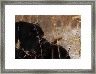 Zephyr Series Framed Print