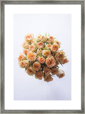 30 Roses Framed Print by Shelby  Young