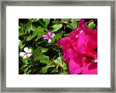 303 Framed Print