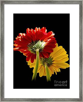 Framed Print featuring the photograph 3093-two Gerbers by Elvira Ladocki
