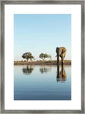 Africa, Botswana, Chobe National Park Framed Print by Paul Souders