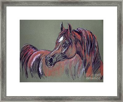 Arabian Horse  Framed Print by Angel  Tarantella