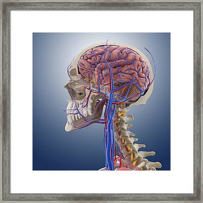 Head And Neck Anatomy, Artwork Framed Print
