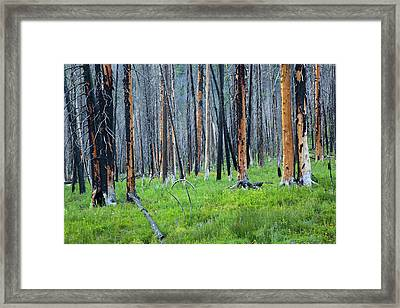Idaho, Sawtooth National Recreation Framed Print by Jamie and Judy Wild