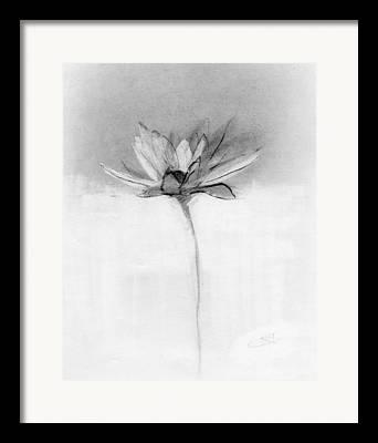 Petal Drawings Framed Prints