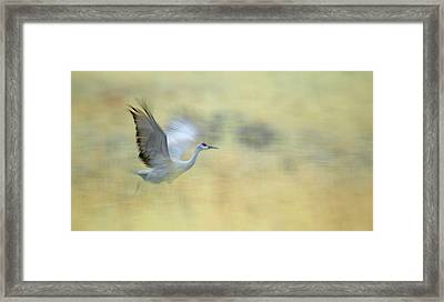 Usa, New Mexico, Bosque Del Apache Framed Print