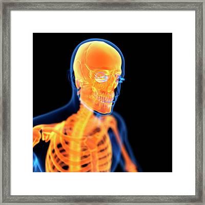 Human Skull Framed Print by Sebastian Kaulitzki