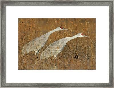 Usa, New Mexico, Bosque Del Apache Framed Print
