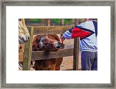 3481-200 Framed Print by Lewis Mann