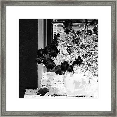Flowers In Negative Framed Print