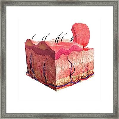 Human Skin Framed Print by Pixologicstudio