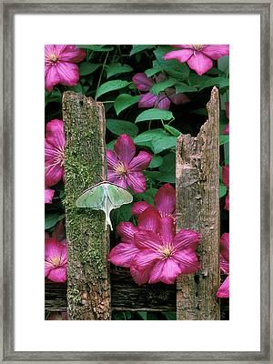 Usa, Pennsylvania Framed Print