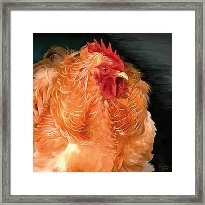 36. Frizzled Buff Cochin  Framed Print