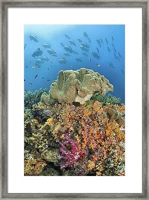Indonesia, Papua, Raja Ampat Framed Print by Jaynes Gallery