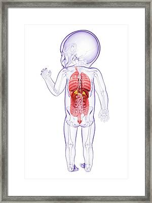 Baby's Anatomy Framed Print by Pixologicstudio