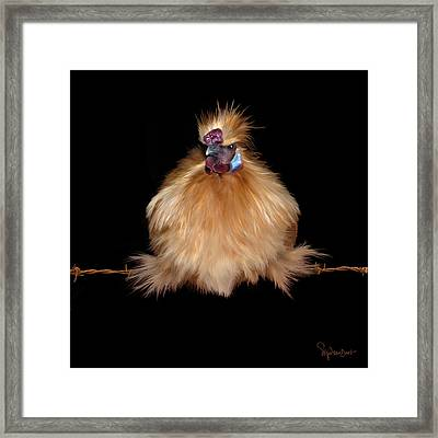 37. Jodokus On A Wire Framed Print