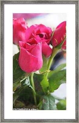 Roses For You  Framed Print by Gornganogphatchara Kalapun