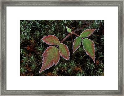 Usa, Michigan, Upper Peninsula Framed Print by Jaynes Gallery