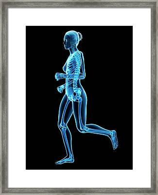 Skeletal System Of Runner Framed Print