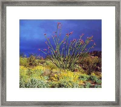 Usa, California, Anza-borrego Desert Framed Print by Jaynes Gallery
