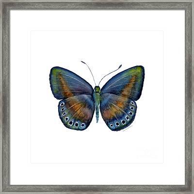 39 Mydanis Butterfly Framed Print
