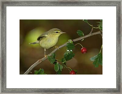 Nature And Travel Images Framed Print