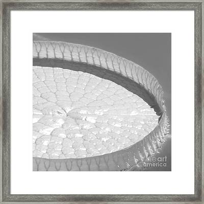 #3a Framed Print by Sabrina L Ryan
