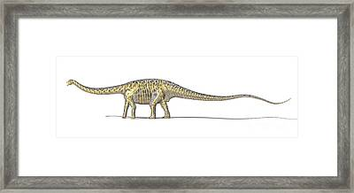 3d Rendering Of A Diplodocus Dinosaur Framed Print by Leonello Calvetti