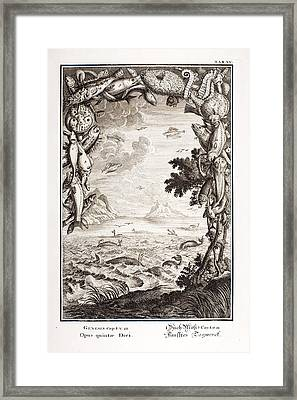 5th Day Of Creation, Scheuchzer, 1731 Framed Print