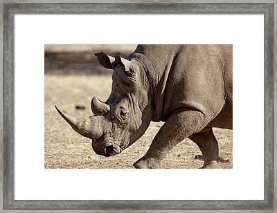 Africa, Namibia, Windhoek, Okapuka Ranch Framed Print by Jaynes Gallery