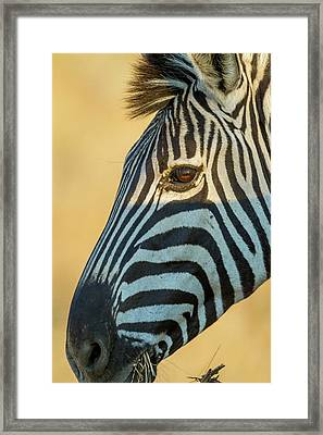Africa, South Africa, Londolozi Private Framed Print