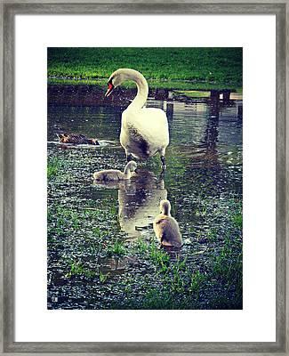 All In The Family Framed Print by Cyryn Fyrcyd