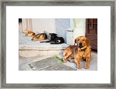 4 Amigos Framed Print by Pedro Nunez