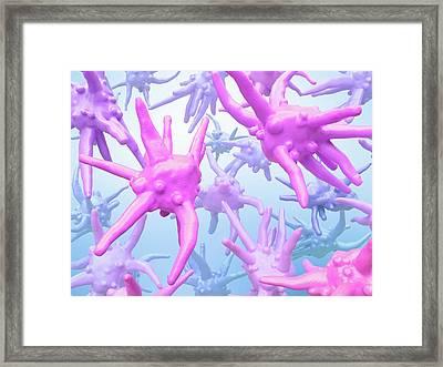 Amoebae Framed Print