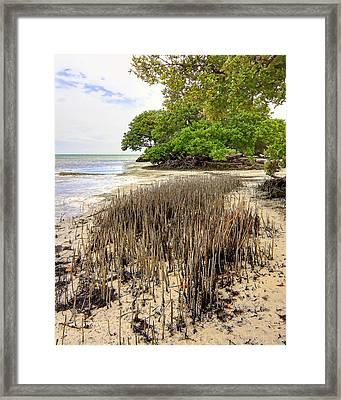 Anne's Beach-2 Framed Print by Rudy Umans