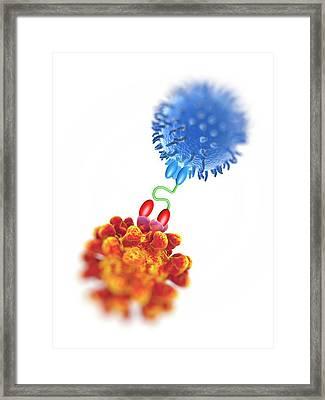 Antibody Acting Against Tumour Cell Framed Print