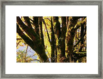 Autumn 3 Framed Print by J D Owen