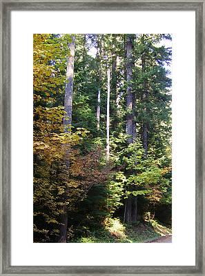 Autumn 8 Framed Print