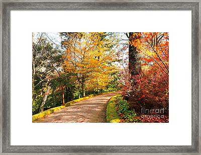 Autumn Colors Framed Print by Gaspar Avila