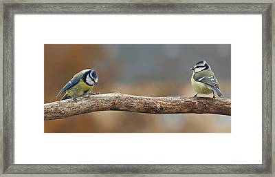 Birds Framed Print by Heike Hultsch