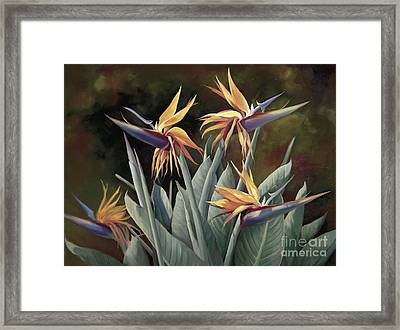 4 Birds Of Paradise Framed Print by Laurie Hein